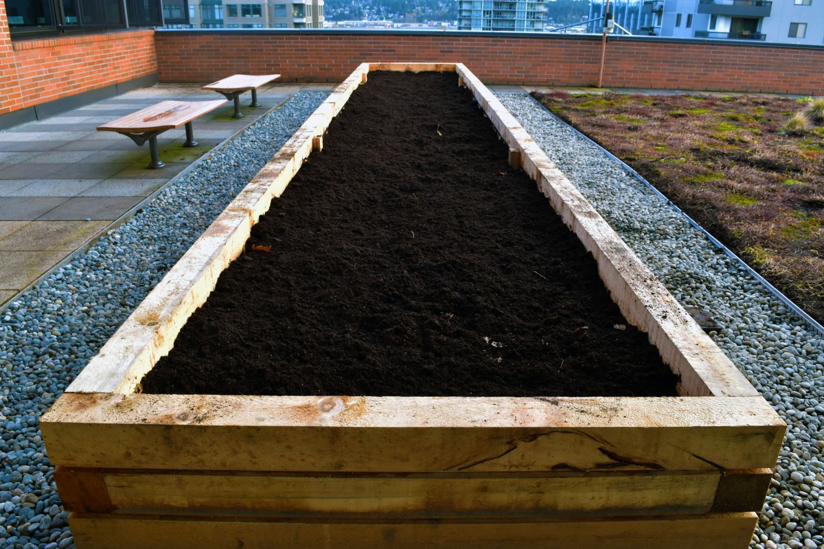 Indigenous garden takes root at the New West Campus